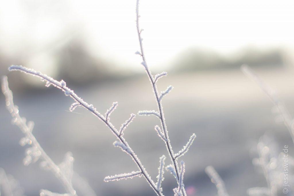 img_7985